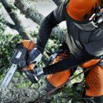 Обрезка, спил и удаление деревьев